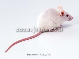 ハツカネズミの画像 p1_3