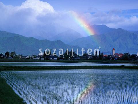 たんぼと虹