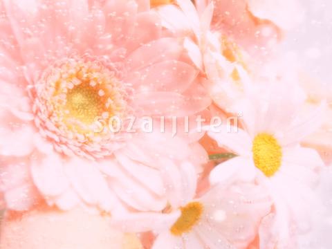 ガーベラの画像 p1_9
