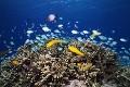 珊瑚礁と熱帯魚
