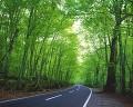 林間の道路