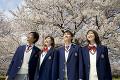 桜と高校生