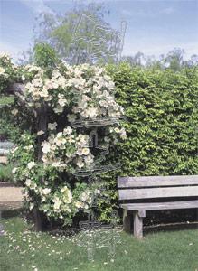 ガーデニング(花、花壇)