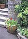 ガーデニング(花、鉢植え)