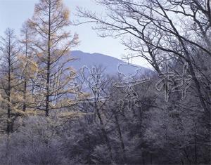 黄葉のカラマツ林と男体山(小田代ヶ原/栃木県日光市)