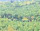 紅葉のカラマツ林(裏男体林道/栃木県日光市)