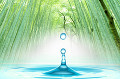水滴と竹林