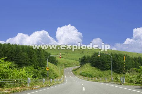 緑の中の道路