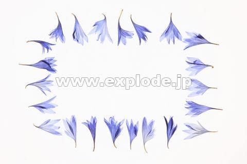 小花の押し花(青) ▼この写真素材が収録されている素材集  小花の押し花(青)