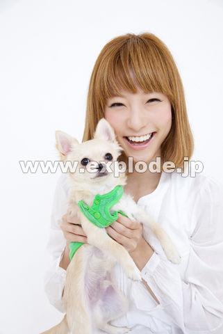 チワワを抱っこする笑顔の女性
