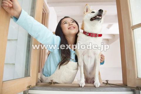窓を開け空を見上げる柴犬と女の子