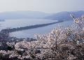 天橋立と桜