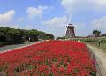 花博記念公園鶴見緑地のサルビアと風車