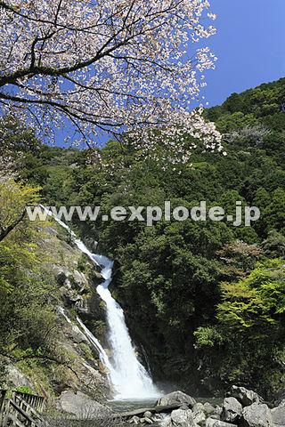 見帰りの滝と桜