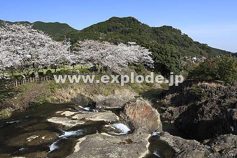 轟の滝公園の桜