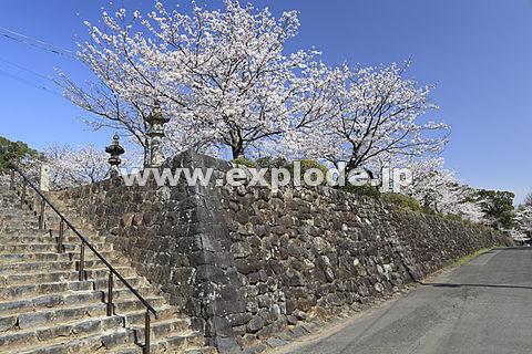 鹿島城跡と桜