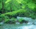 085:渓流