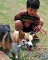 001:男の子 犬(ウェルシュ・コーギー・ペンブローク)