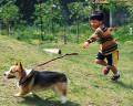 002:男の子 犬(ウェルシュ・コーギー・ペンブローク)