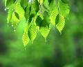 002: 新緑 水滴