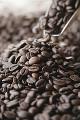 005:コーヒー豆