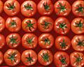 003:トマト